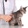 Ветеринарные клиники в Верхнеяркеево